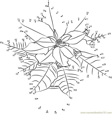 poinsettia coloring page pdf poinsettia dot to dot printable worksheet connect the dots