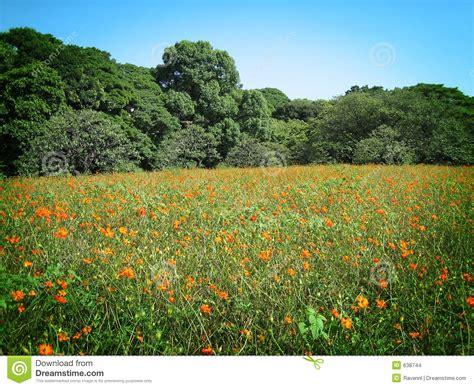prato con fiori prato con i fiori immagini stock immagine 638744