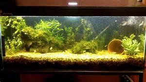 Community Fish Tank Walstad Method   YouTube