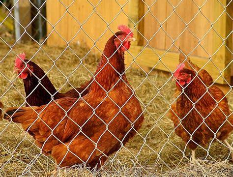 backyard livestock state agriculture commission approves backyard livestock