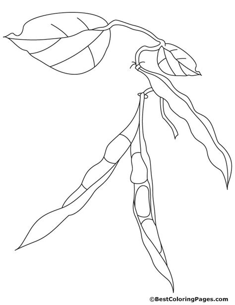 free coloring pages of bean