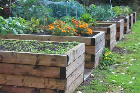 reasons  raised beds      garden