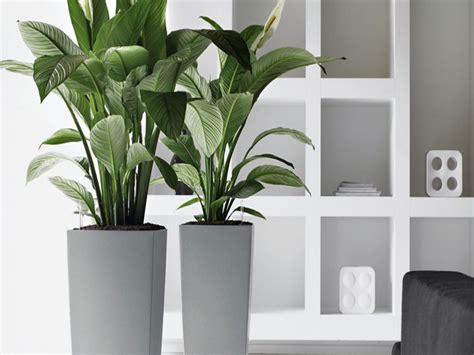 indoor plants online executive office artificial plants indoor office plants
