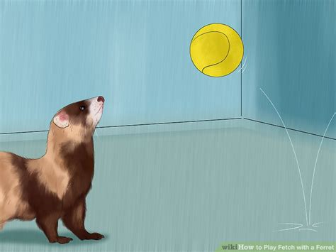 how to to play fetch how to play fetch with a ferret 12 steps with pictures