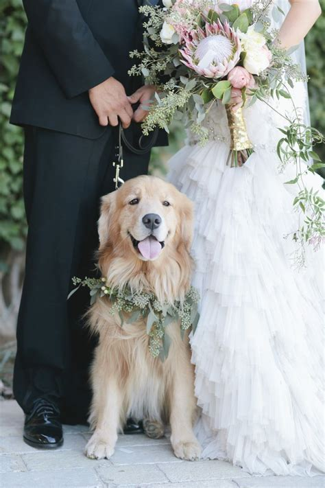 Best 25  Dog wedding ideas on Pinterest   Dog engagement