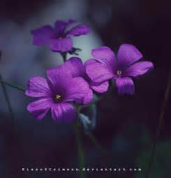 flowers images purple flowers hd wallpaper and background