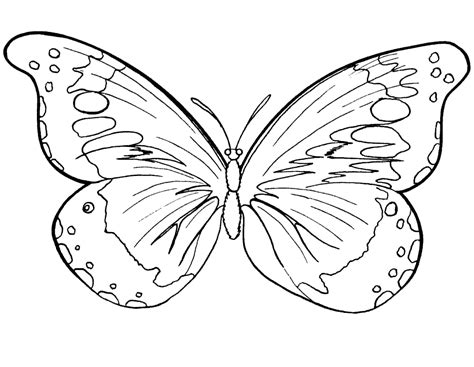 butterfly colors free printable butterfly coloring pages for