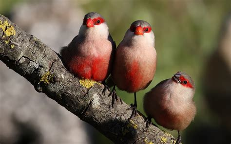 download wallpaper 1920x1200 three birds standing on a