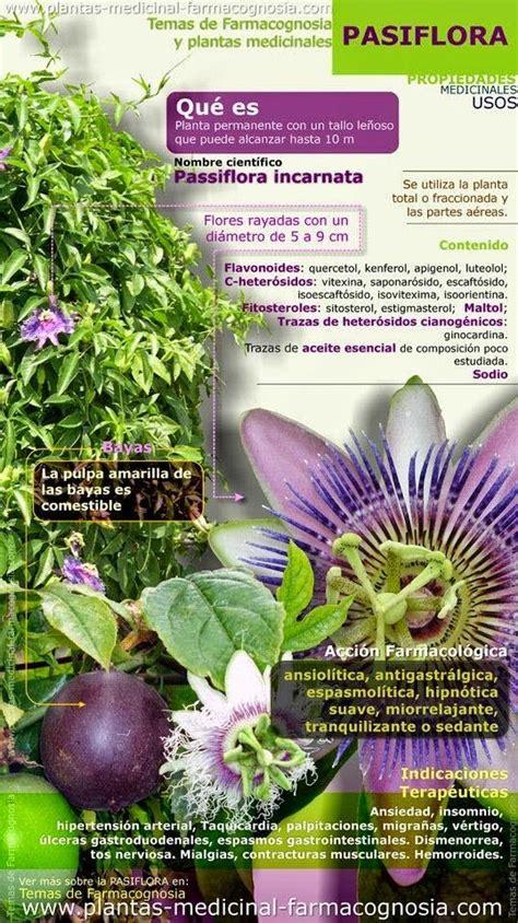 calendario del huerto urbano en setiembre calendarios pinterest m 225 s de 25 ideas incre 237 bles sobre el huerto en pinterest