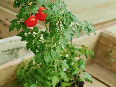 zootly friends  benefits companion plants