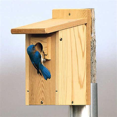 eastern bluebird house plans duncraft com duncraft wsb3 eastern bluebird house set of 3