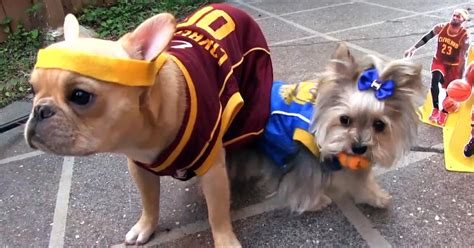 pug rescue mobile alabama dogs recreate warriors cavaliers nba finals on the feed cbs news