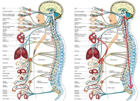 human anatomy diagram human diagram