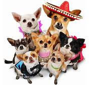 Beverly Hills Chihuahua 3 Blu Ray Review  BEYOND THE