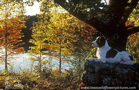 Fall Portrait : Animals : Gary Regner Photography