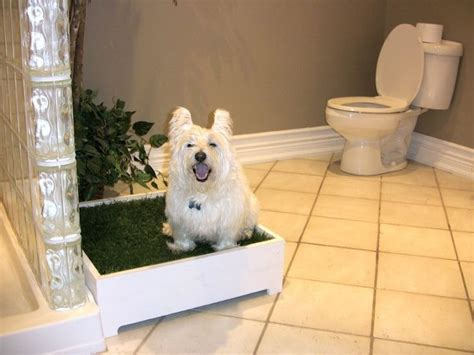 should i punish my dog for peeing in the house best indoor dog potty ideas on pinterest dog potty dog backyard and dog toilet