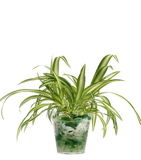 coltivare in casa senza lade coltivare in casa senza sporcare garden4us