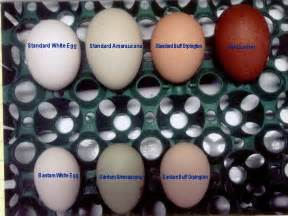 chicken egg colors pin by judy on chicken breeds egg and
