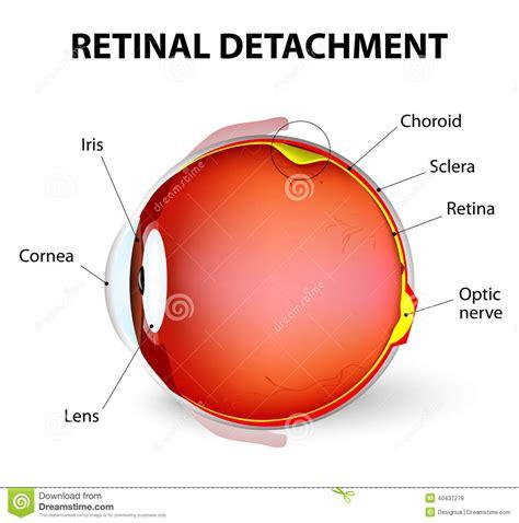 retina diagram retina diagram 28 images retina farmington retina