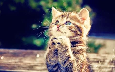 Cinta Untuk Anak Kucing gambar lucu binatang kambing terlengkap display picture unik