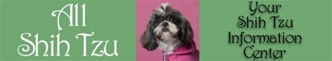shih tzu pregnancy signs shih tzu information center pregnancy