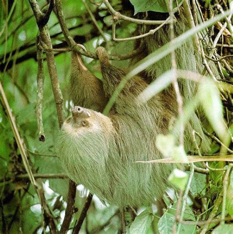 be a sloth ebook sloths amazing creatures beautiful