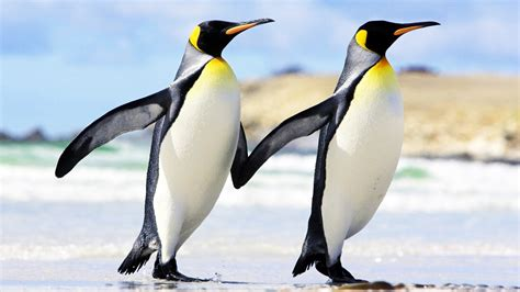 Sweet Home 3d House Design Penguin Hands Together Friendship New Hd Wallpapernew Hd