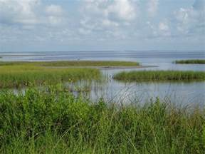 Marsh Tx Brickwater Marshes Mortal Engines Wiki Fandom Powered