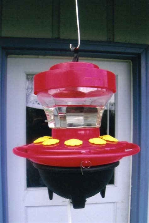 hummers heated delight our feeders