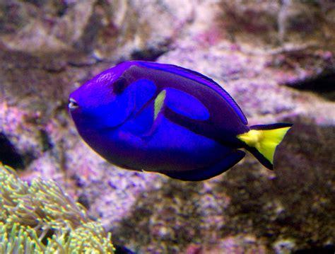 sydney aquarium  south wales australia aquarium