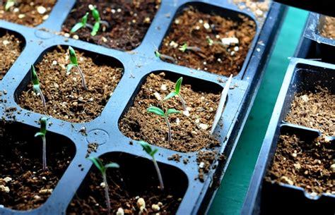 Cooks Garden Seeds by Start Some Garden Seeds A Tutorial Part 2