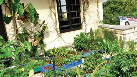 terrace vegetable garden how to grow vegetables on your terrace and balcony