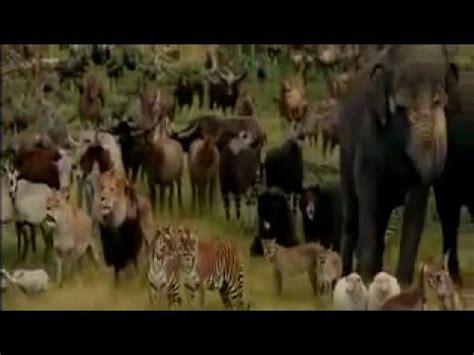 noahs ark animals youtube