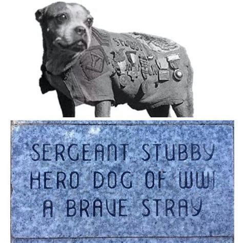 How Sergeant Stubby Died The 25 Best Sergeant Stubby Ideas On War Dogs When Is Anzac Day And Dogs