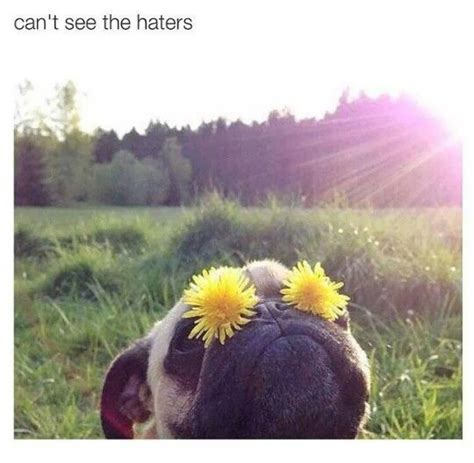 pug haters can t see the haters pug pugs cas and lol