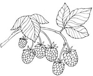 three raspberries coloring page free printable coloring red raspberry coloring page free printable coloring pages