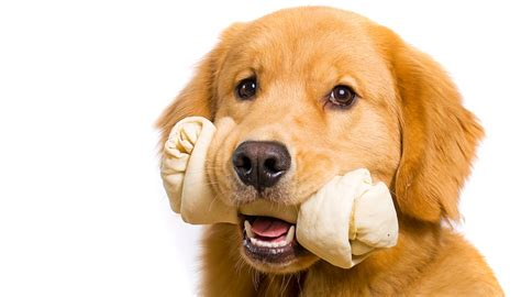 rawhide bones for dogs are rawhide treats safe for dogs tasty pet foods