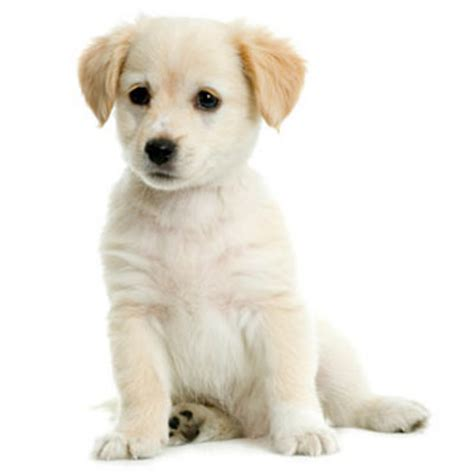 cutest puppy names names cats on puppy names hd wallpapers