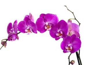 color orchids pin by pucci on colour 2014 radiant orchid