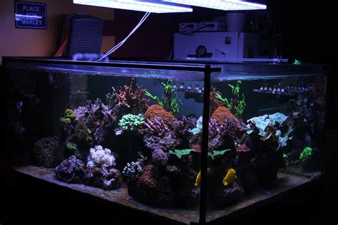 Lu Led Aquarium 2015 best led aquarium light for saltwater tank orphek