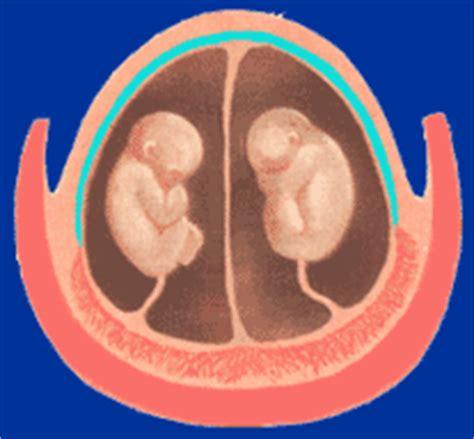 gemelli monozigoti diversi scienza