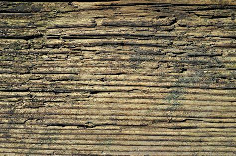 wallpaper pohon coklat wallpaper background kayu stok wallpaper