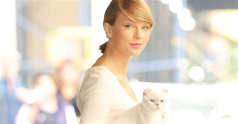 taylor swift in bed taylor swift s cat scrounging for treats in bed is all of