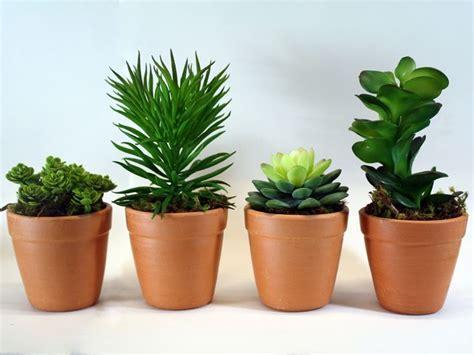 piante grasse da vaso coltivare piante grasse da esterno le piante grasse