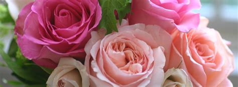 An Old Fashioned Beauty ? Cabbage Rose   BloomNation Blog