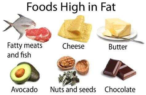 healthy fats rich foods medifit biologicals fats