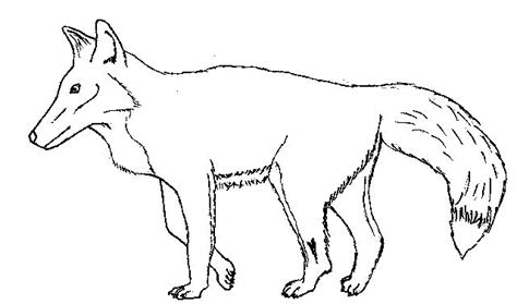 coloring page of a red fox fox coloring pages getcoloringpages com