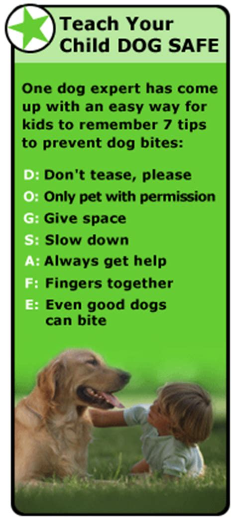 how to small dogs not to bite preventing bites
