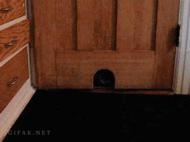 lock cat in bathroom 17 best ideas about door locks on pinterest front door