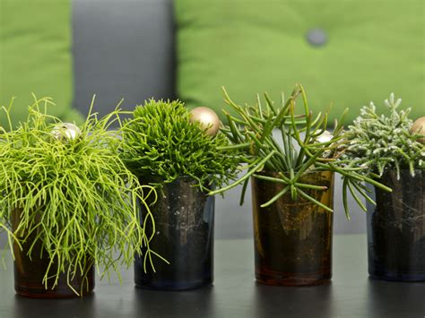 Home Lighting by How To Grow And Care For Rhipsalis World Of Succulents